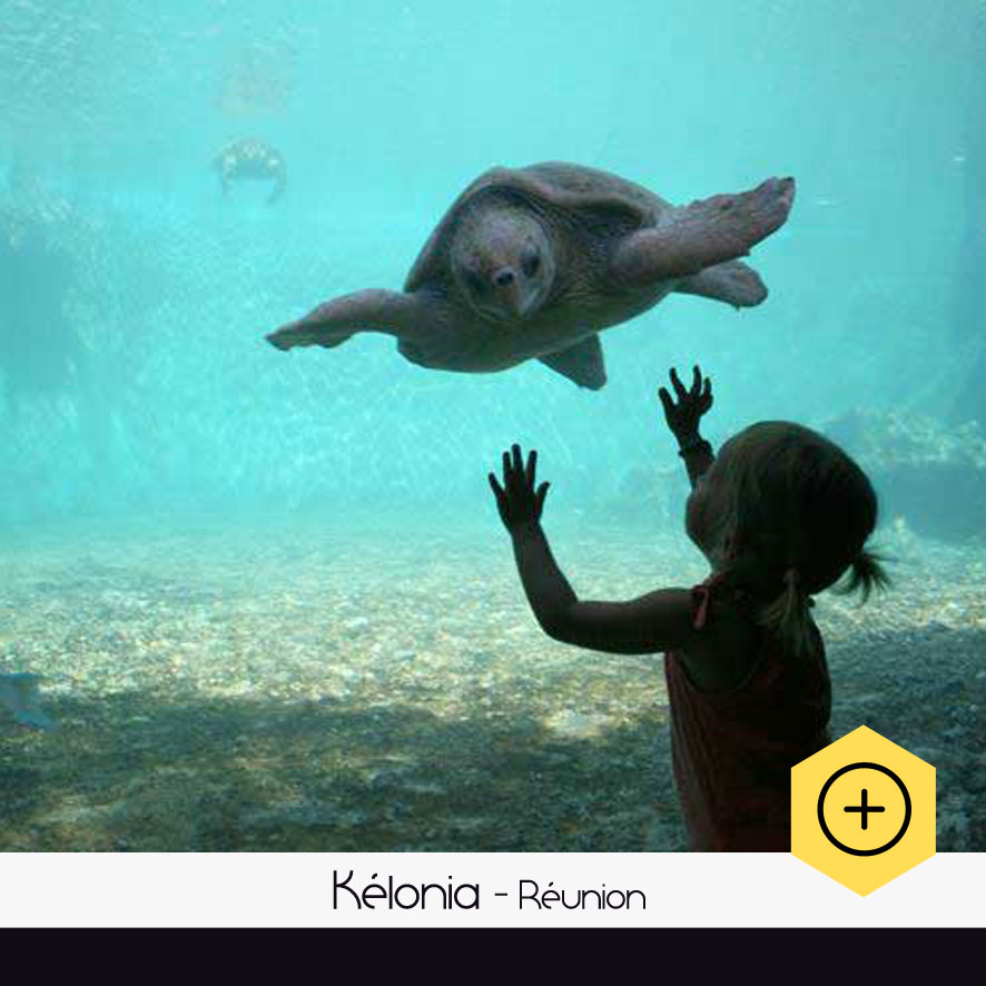 Kélonia - observatoire des tortues marines
